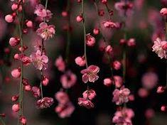 Resultado de imagen para fondo rosa con florecitas