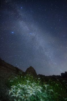 Milky Way and Edelweiss (in Japanese - \'Komausuyukisou\') in the mountains of Japan --- by Masahiro Miyasaka on Flickr