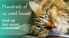 Adoption fees for cats (1 year & older) are WAIVED at the Dumb Friends League through August!