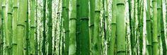 Les fibres naturelles et écologiques font la joie du textile moderne. Maïs, bambou, chanvre, lin, ortie, soie, ingeo, revue des textiles bio et fibres naturelles