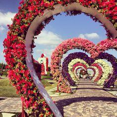 Dubai Miracle Garden . . . ❤️