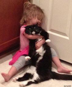 사랑의 길로틴 초크 당한 고양이 : 네이트 뉴스