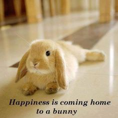 Happiness is coming home to a Bunny