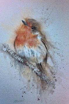 Robin Original Watercolour By Sylvia Farrow