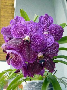 mi orquidea favorita