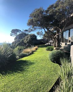 Image may contain: tree, grass, plant, sky, outdoor and nature Australian Garden Design, Australian Native Garden, Back Gardens, Outdoor Gardens, Casa San Sebastian, Bungalow, Coastal Gardens, Farmhouse Garden, Mediterranean Garden