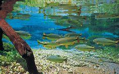 Sucuri River, Bonito, Mato Grosso do Sul