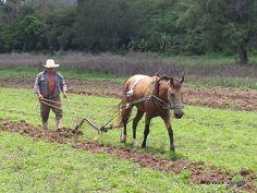 Personaje- Lencho está despierto. Sabía escribir. Es fiel, un campesino, y rudo. Es un granjero.