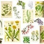 Las 230 plantas medicinales más efectivas y sus usos. COMPÁRTELO PARA QUE SE SEPA!