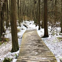 visit the Atlantic White Cedar Swamp when everything is frozen