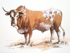 Contemporary South African Artist Erna Wade paints Nguni, wildlife and other African themes in Oils, Acrylic, Mixed Media and Watercolour African Theme, South African Artists, Watercolours, Watercolor Paintings, Moose Art, Wildlife, Paper, Animals, Water Colors