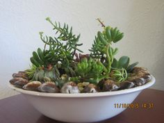 Finally planted some succulents in a bowl and added some seashells.