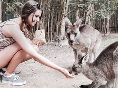 today i made a kangaroo friend and i named her sharon, but when i tried to take a selfie with her she kicked my leg. the friendship didn't… Jess And Gabe, Gabriel Conte, Cute Youtubers, Jess Conte, Perfect Wife, Park Min Young, Best Couple, Tumblr Girls, Picture Poses