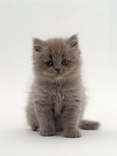 Gray Baby Kitty!!