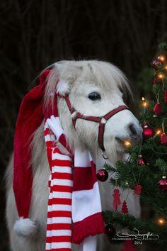 — Pepe - Merry Christmas. #christmas #santaclaus #tree #holidays