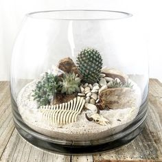 Busy day making desert scenes. I did get stuck a few times by my little cactus… #cactusterrarium #DesertScenes #cactusdesert