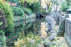 写真 根津神社の池 日本の原風景っぽくない?
