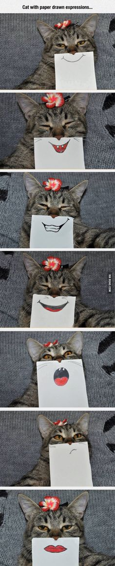 Cat with paper drawn expressions. They look so cute.