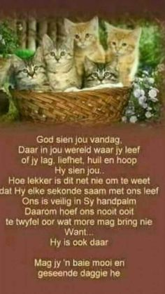 Good Morning Wishes, Good Morning Quotes, Evening Greetings, Afrikaanse Quotes, Goeie Nag, Goeie More, Word Of God, Poems, Bible