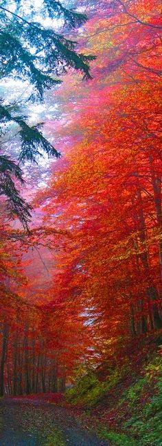 Autumn splendor.... want to drive my Porshe Carrerra through those leaves and look in the rear view mirror and watch them dance across the road .....only on pinterest!!!!!! Closing my eyes to see it!