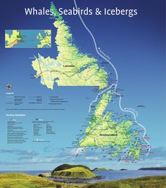 A map of popular places to see whales, birds and icebergs in Newfoundland and Labrador.