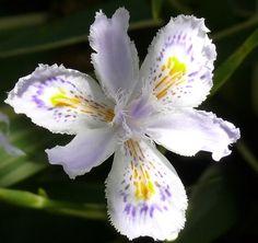 Resultado de imagen para Orquídeas raras