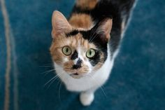 ASPCA Happy Tails: Keeping Up With Kurby