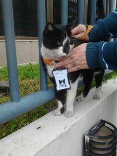 IBMの社員用IDカードを持つ野良猫