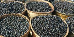 Die kleine purpurrote Beere aus dem Amazonas bewirkt Wunder. Sie verhindert Alzheimer, bekämpft Krebs, wirkt gegen Herz-Kreislauferkrankungen und Diabetes, steigert die Muskelleistung und erhöht sowohl das körperliche als auch das geistige Energielevel. Sie gehört weltweit zu einem der höchsten antioxidativen Lebensmittel und überragt herkömmliche antioxidantienreiche Lebensmittel um das 10-Fache. http://superfood-gesund.de/acai-beere/