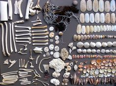 Seaside trinkets shells and bones collection Shell Collection, Nature Collection, Wiccan, Pagan, Cabinet Of Curiosities, Natural Curiosities, Ange Demon, Witch Aesthetic, Nature Aesthetic