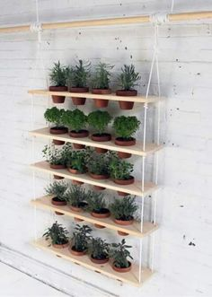 So perfect for my rosemary, time, dill and basil