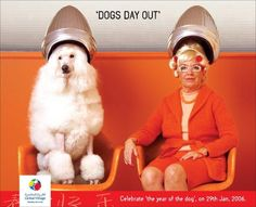 """DOGS DAY OUT"" Print Ad  by Leo Burnett Dubai"
