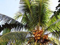 5/13(金) バリ島ウブドのお天気は晴れ。室内温度29.0℃、湿度74%。 今日も朝から青空が広がっています。すでに気温は29度。今日は暑くなりそうですね~!