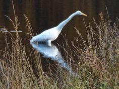 Ruud's natuurblog: Zilverreiger en herfstkleuren