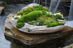 Moss Planters