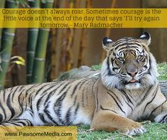 It's all about courage to move forward.