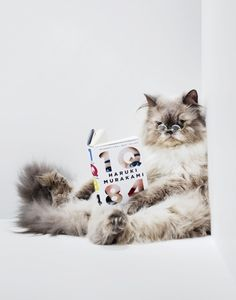 Cats should read too