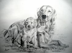 graphite portrait; 'Goldie and Pup',  23 x 18 inches. available.