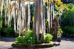 Popular on 500px : Jardin Botanico Tenerife #2 by oleskipper55
