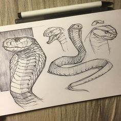 WEBSTA @ jonnadon1 - Cobra sketch before heading to bed #cottonwoodarts #sketchbook #sketch #animal #animaldrawing #animalsketch #reptiles #snake #snakes #cobra #jonathankuo #jonnadon1#inktober #inktober2016