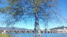 ______AvoGi (e as Pulgas)_____: Ponte de Lima (como eu nunca a tinha visto)