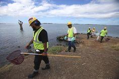 12 Tragic Images Of The Massive Molasses Spill At Honolulu Harbor Ocean Pollution, Marine Life, Art, Art Background, Kunst, Performing Arts, Art Education Resources, Artworks