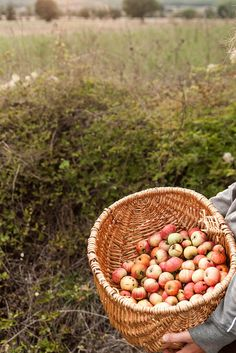 apple harvest #thesimplethings