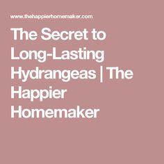 The Secret to Long-Lasting Hydrangeas   The Happier Homemaker