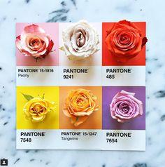 Lucia Litman | Pantone | Colour