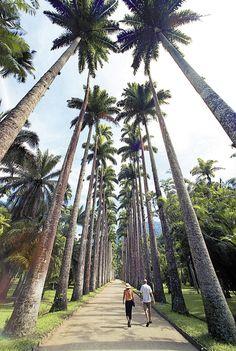 RIO DE JANEIRO - Jardim Botânico