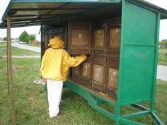 زنبورداری کابینی