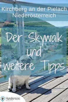 Welche Wanderungen mit Hund man im Pielachtal unternehmen kann, erzählen wir euch hier. Skywalk, Sagenweg, Geißbühel oder die Burgruine Rabenstein sind hundefreundliche Tipps in Niederösterreich. Hund | Wandern | Hundeblog | Österreich | Urlaub | Ausflug | Wanderung | Hunde Yorkie, Dog Travel, Austria, Sailing, Places To Go, Road Trip, Journey, Vacation, World