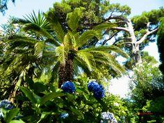 Villa San Michele - Anacapri, Nikon Coolpix L310, 4.5mm,1/800s,ISO1600,f/8.7, 201507151206
