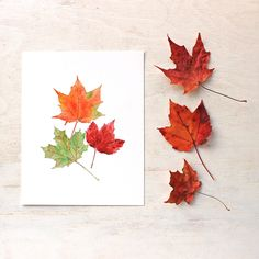 A beautiful archival print of maple leaves based on one of my original watercolor paintings. One of the most distinctive and beautiful aspects of maples trees is that their autumn display can include